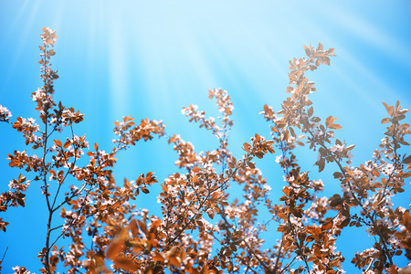 Branches of blooming fruit tree on sky background