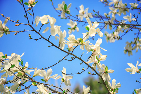 Branches of blooming tree flowers on sky background Foto de archivo