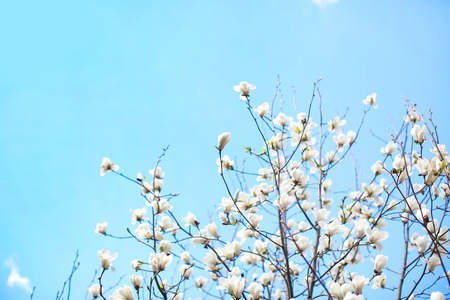 Branches of blooming tree flowers on sky background