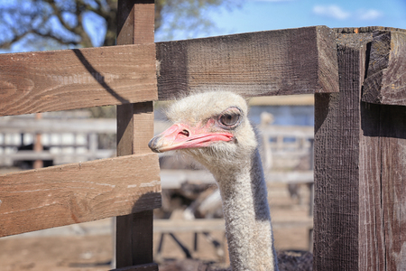 Closeup view of camel bird on sunny day Stock Photo