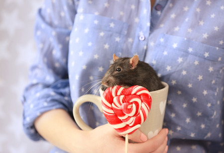 Young woman holding cup with cute rat and lollipop, closeup