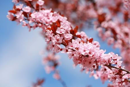 Branch of blooming tree flowers on blurred background Imagens