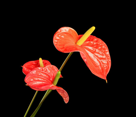 Beautiful tropical flowers on dark background