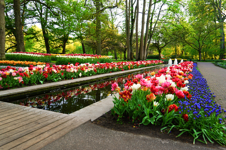 Beautiful blooming tulips in park