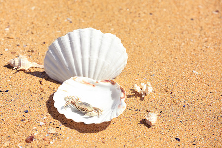 Small crab and shells on sand at sea shore. Vacation concept Imagens
