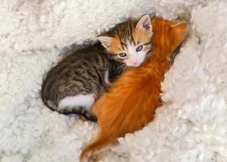 Cute little kittens resting on soft plaid at home 免版税图像