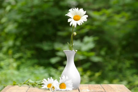 Beautiful chamomile in white vase on wooden table outdoors