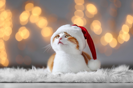 Cute cat in Santa Claus hat against blurred Christmas lights 写真素材