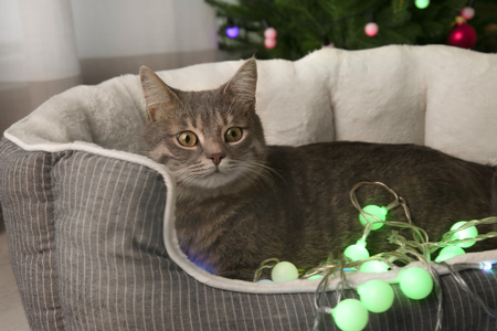 Cute cat with Christmas garland at home