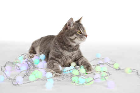 Cute cat with Christmas garland on white background Фото со стока
