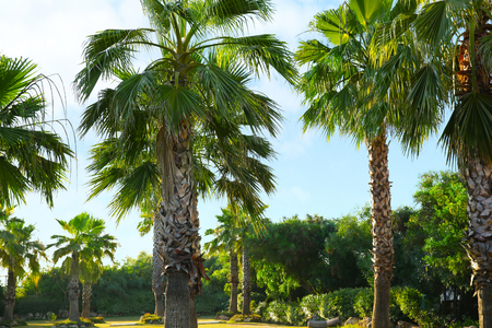 Tropical palm grove at resort Stok Fotoğraf