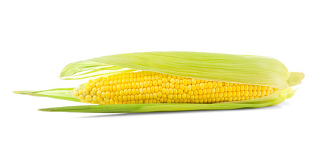 Fresh corn cob, isolated on white background 写真素材