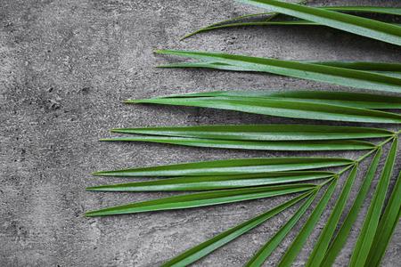 Sago palm leaf on grey background