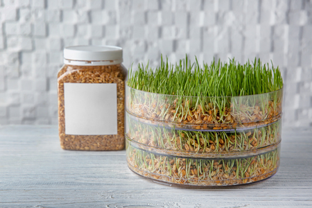 Sprouter with wheat grass on table