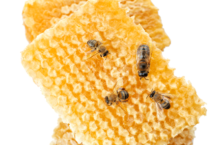 Honeycomb with bees on white background