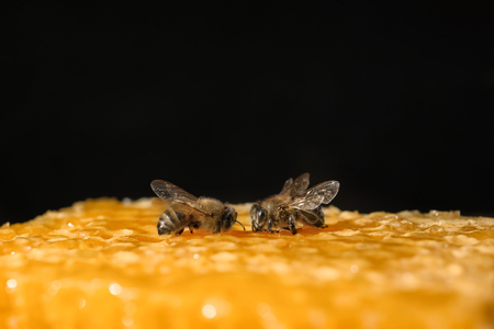Bees on honeycomb against black background Stock Photo