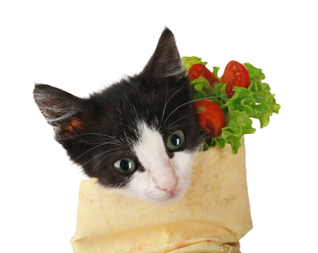Little funny kitten in lavash on white background