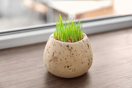 Pot with wheat grass on window sill