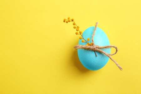 Easter egg with mimosa on color background