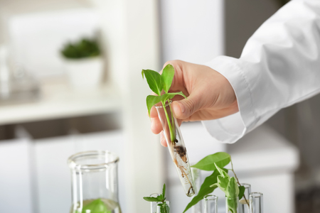 Lab worker holding test tube with plant on blurred background, closeup