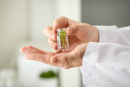 Lab worker holding bottle with plant on blurred background, closeup Stockfoto