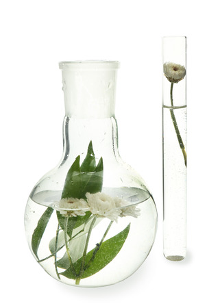 Test tube and flask with flowers, isolated on white