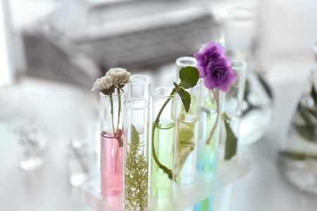 Plants in test tubes on table Stockfoto