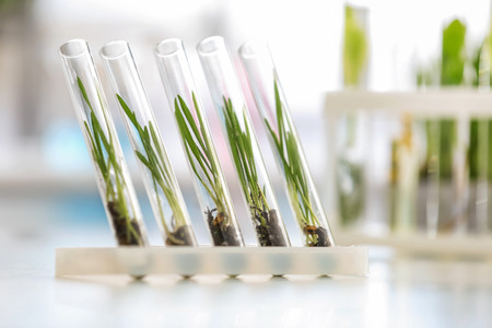 Plants in test tubes on blurred background