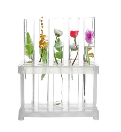 Test tubes with plants in holder, isolated on white 版權商用圖片