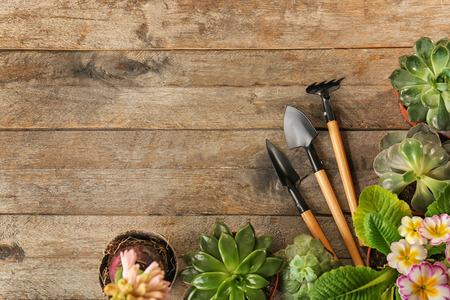 Pots with plants and gardening tools on wooden background