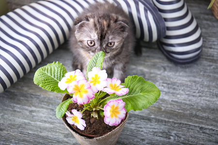 Cute kitten near pot with beautiful plant on floor at home
