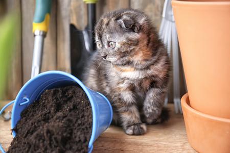 Cute kitten near overturned bucket with soil on floor at home