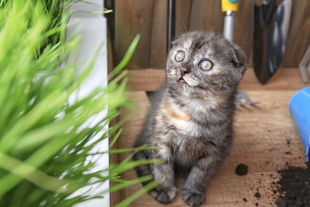 Cute kitten near green grass on floor at home Stock Photo