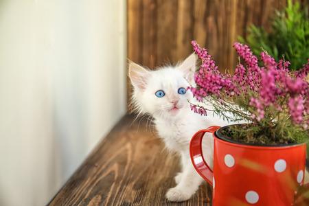 Funny kitten with houseplant indoors Banco de Imagens