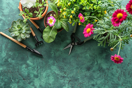 Pot flowers and gardening tools on color textured background
