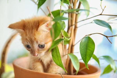 Funny kitten in pot with houseplant indoors Banco de Imagens