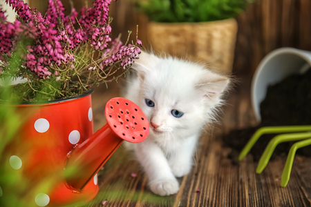 Funny kitten with houseplant and gardening tools indoors