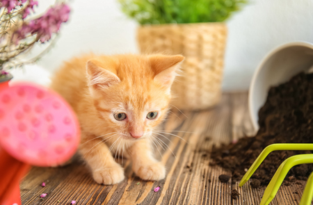 Funny kitten near overturned pot with soil and gardening tools indoors