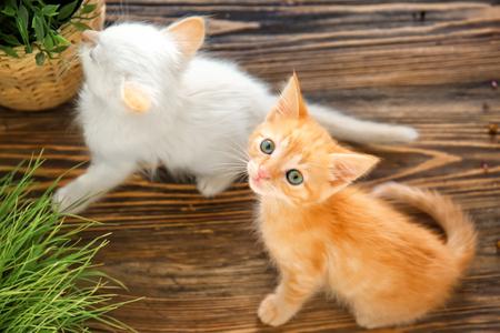 Funny kittens with houseplants indoors Banco de Imagens