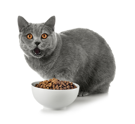 Adorable cat and bowl with food on white background
