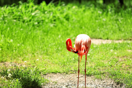 Beautiful flamingo in zoological garden