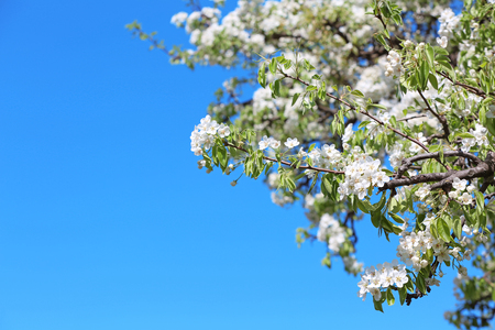 Beautiful blossoming tree branches on sky background