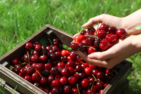 Woman with handful of fresh ripe cherry outdoors