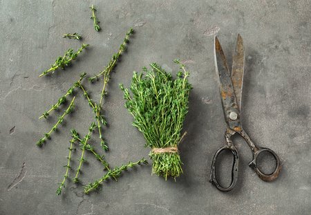 Fresh thyme with scissors on grey background