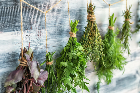 Bunches of fresh herbs hanging near wooden wall Imagens