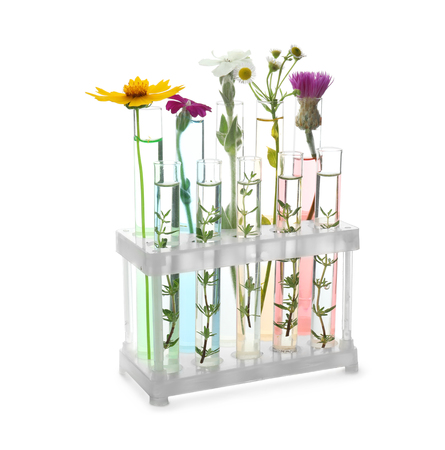 Test tubes with flowers in holder on white background