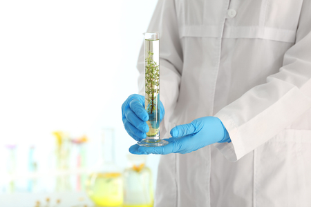 Scientist holding test tube with plant in laboratory