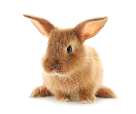 Cute fluffy bunny on white background Stock Photo