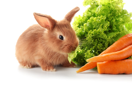 Cute fluffy bunny with lettuce and carrots on white background