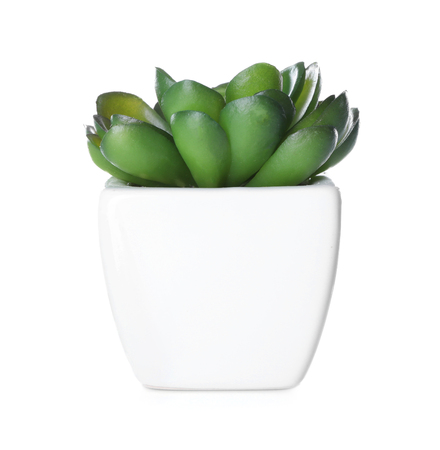Flowerpot with houseplant on white background